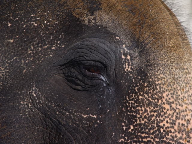 Elephant Face by Sheree Zielke