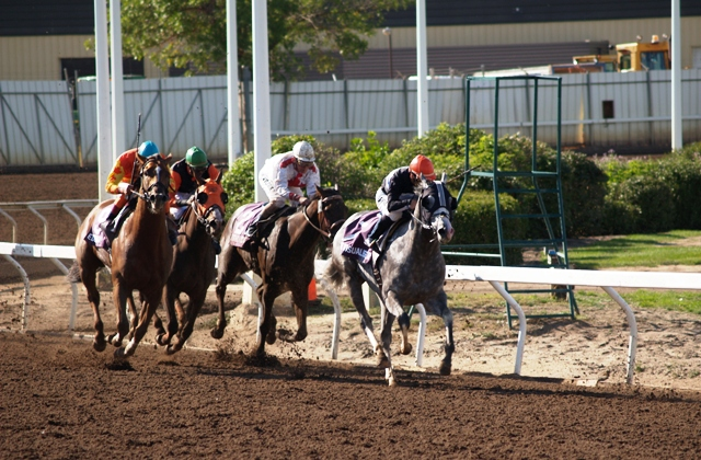 Horse Racing at Edmonton Northlands by Sheree Zielke
