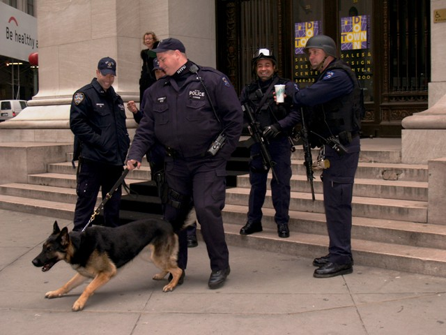 NYC Police Dog by Sheree Zielke