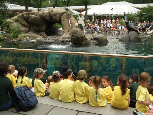 Children watch sea lion show in Central Park by Sheree Zielke